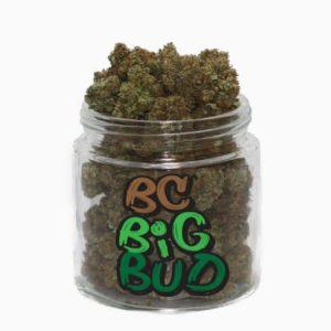 buy bc big bud strain online