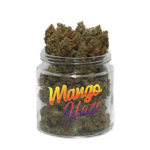 buy mango haze strain online
